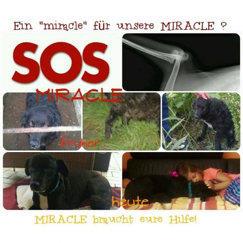 Miracle OP © thino